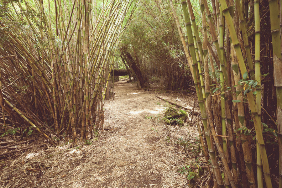 Parte del sendero al Alerzal